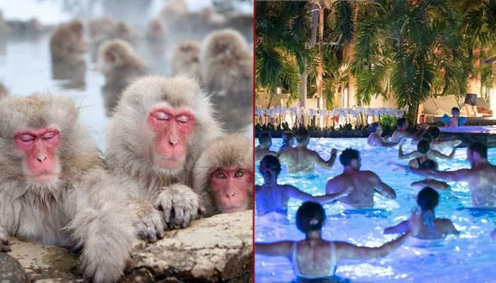 Premierul Japoniei a fost la Therme Bucureşti, să vadă maimuţele care stau în apă termală, exact cum au şi ei
