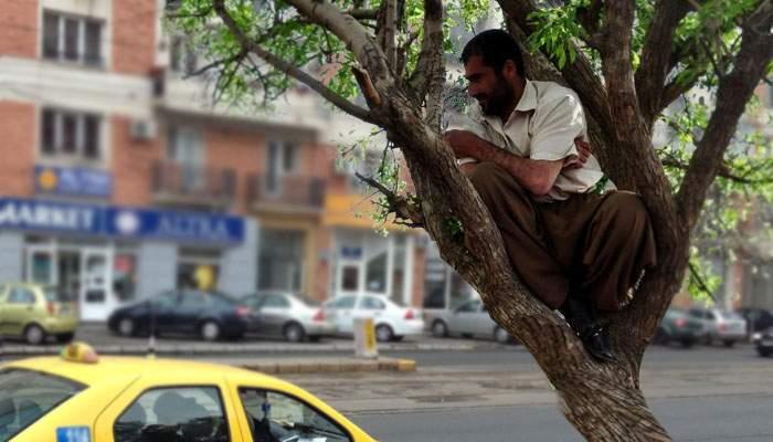 """Taximetrist, prins escrocând clienţii prin metoda """"maimuţa""""! Le lua banii şi fugea cu ei într-un pom"""