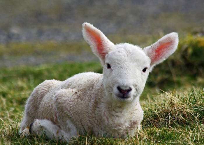 Zece obiceiuri de Paşte de care sigur nu ştiai!