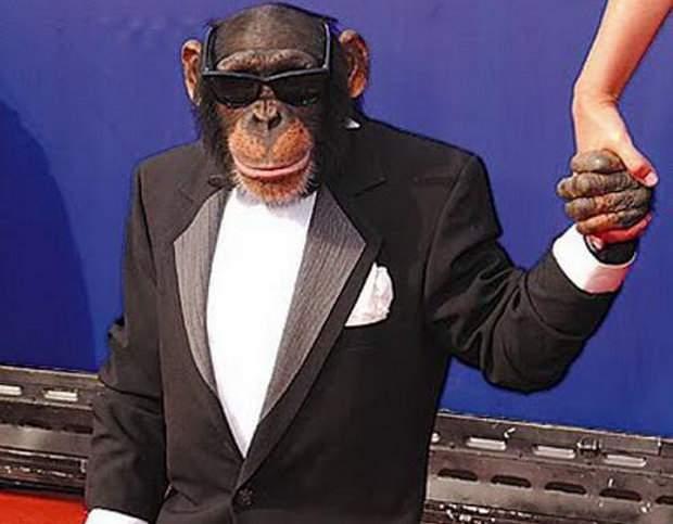 Premieră: SUA vor trimite un cimpanzeu ambasador în România, ca să se poată înţelege cu autorităţile