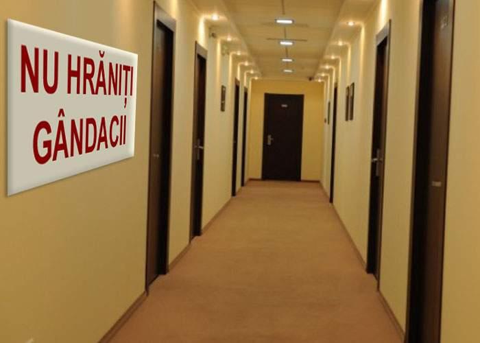 Hotelierii din Mamaia roagă turiştii să nu mai hrănească gândacii din camere