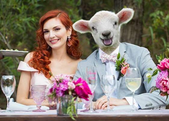 Studiu! Din cauza meniului, la nunţile de vegani sunt mai multe oi decât oameni