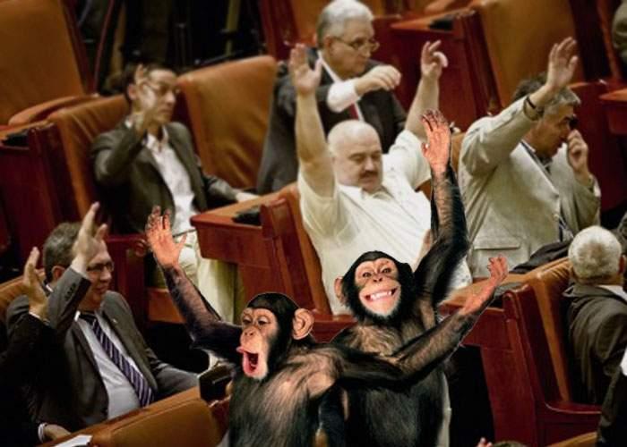 Tensiune în Parlament! Zoo Băneasa şi Circul Globus îşi dispută locul lăsat vacant de Gigi Becali