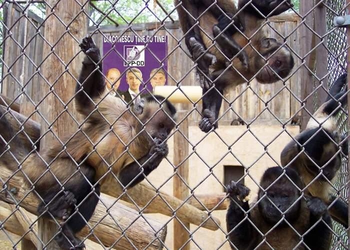 Partidul lui Dan Diaconescu a câştigat detaşat alegerile în colegiul Zoo Băneasa