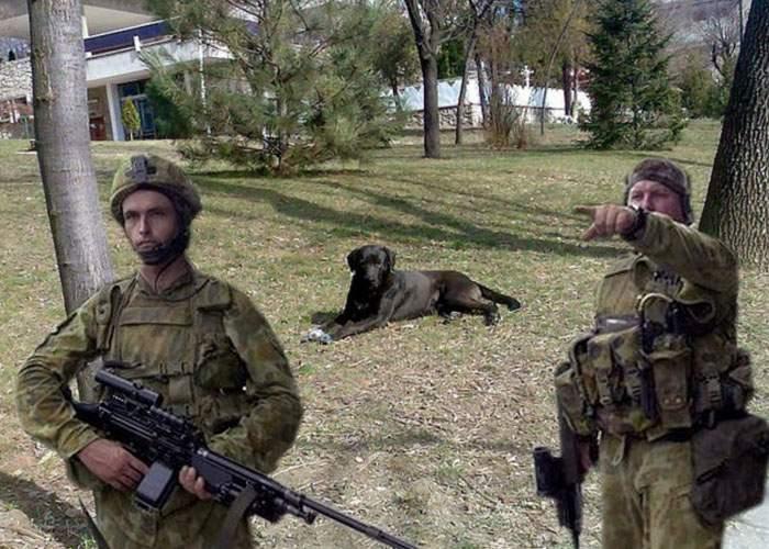 Pază sporită pentru maidanezii din Australia, de teama răzbunării cangurilor