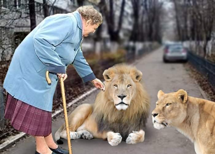 """Nuţu Cămătaru dă vina pe pensionari: """"Dacă nu hrăneau ei leii şi urşii, nu-i mai aveam acum"""""""