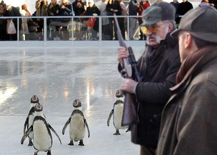După inaugurarea patinoarului uriaş, Ţiriac şi-a chemat prietenii să împuşte pinguini pe el