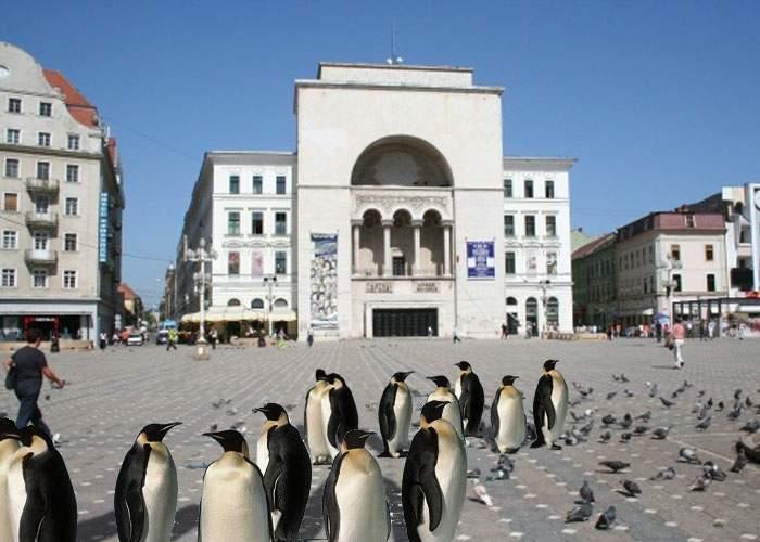 Încă o excentricitate a primarului Timişoarei: a înlocuit maidanezii cu pinguini