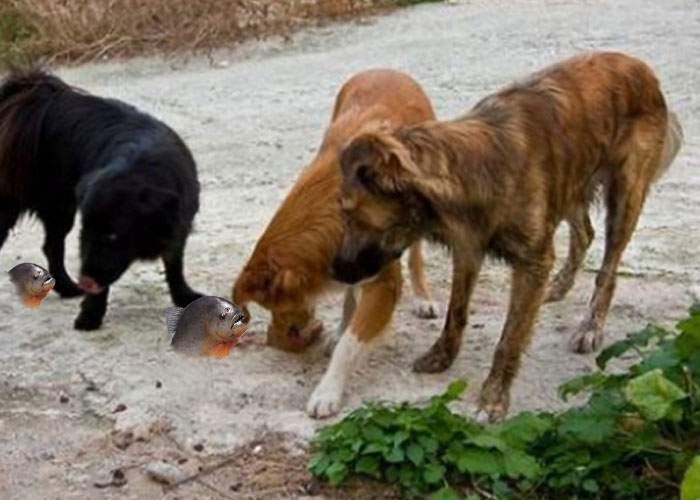 Mii de maidanezi muşcaţi, după ce un inconştient a aruncat peşti piranha în bălţile din Bucureşti