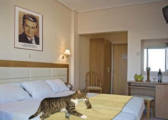 Atenţie la notele umflate. O familie a venit cu pisica la hotel în Mamaia şi au plătit şobolanii pe care i-a mâncat