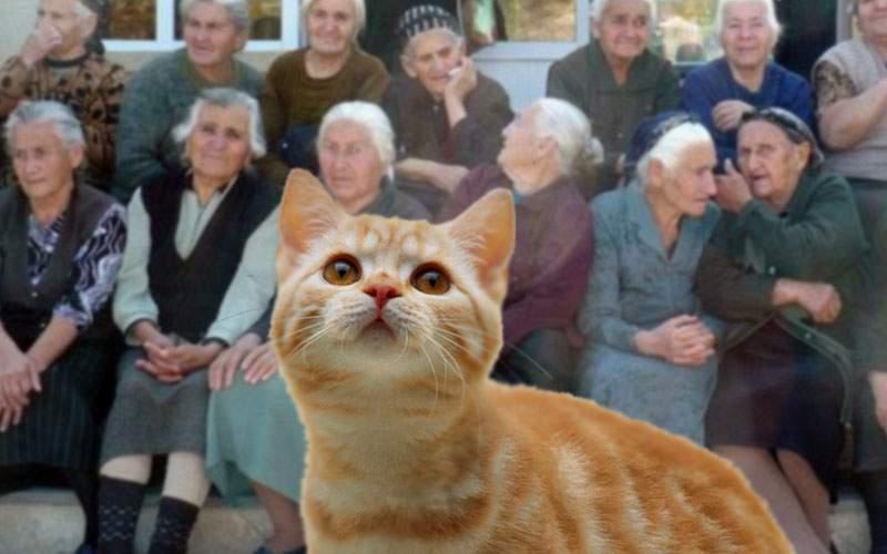 Se poate şi invers! O pisică din Drumul Taberei ţinea în garsonieră 40 de pensionare