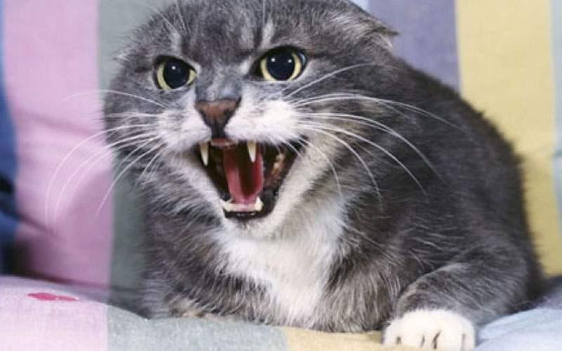 Alarmă falsă! Pisica agresivă din scara blocului era un vecin care asculta Carla's Dreams