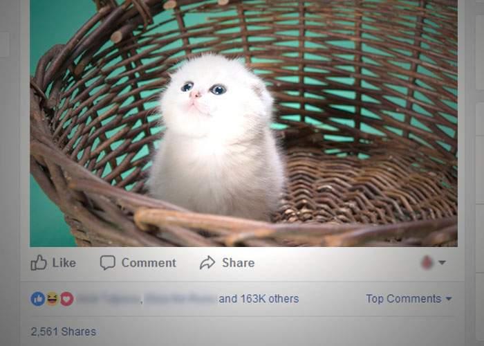 Un român e lider la Like-uri după ce şi-a spălat pisica cu Coccolino şi a postat pozele pe Facebook