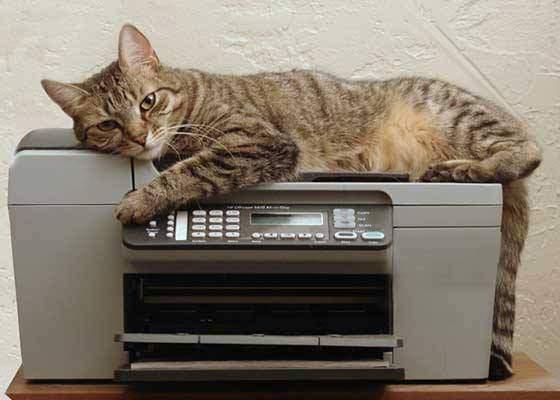 Mii de bugetari în pericol de șomaj, după ce o pisică a fost dresată să folosească xeroxul