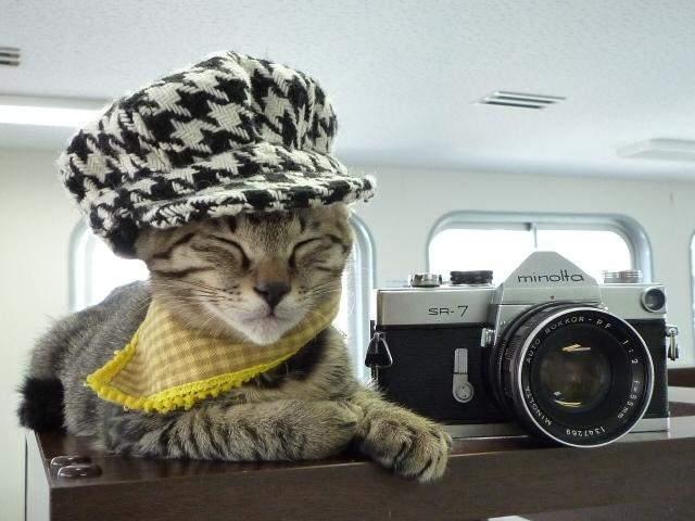 Răzbunare! Pisicile au un Instagram al lor unde pun poze cu oameni în poziţii penibile
