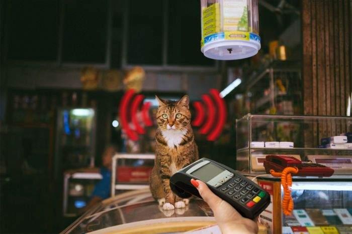 Unui antreprenor român i-a înghiţit pisica un card bancar, dar e ok, că era contactless şi plăteşte cu pisica