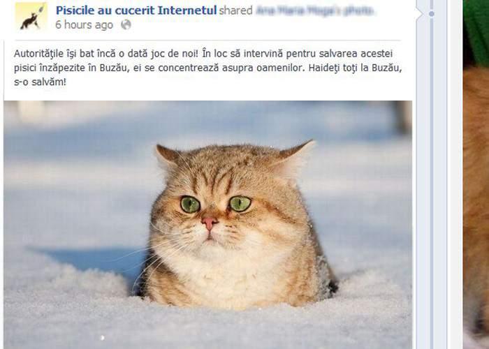 Pe Facebook nu mai e nimeni online! Toţi userii au plecat să salveze o pisică înzăpezită în Buzău