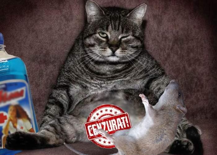 O pisică beţivă din Vaslui violează şoarecii înainte să-i mănânce