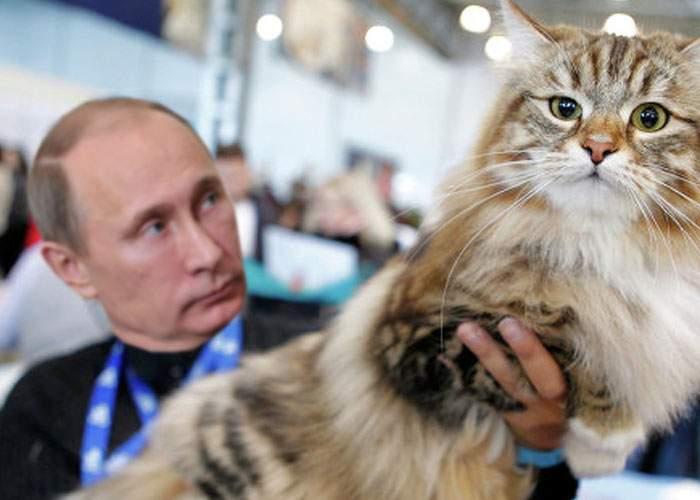 Putin va anexa Liechtensteinul, pentru a-l folosi ca litieră pentru pisica lui