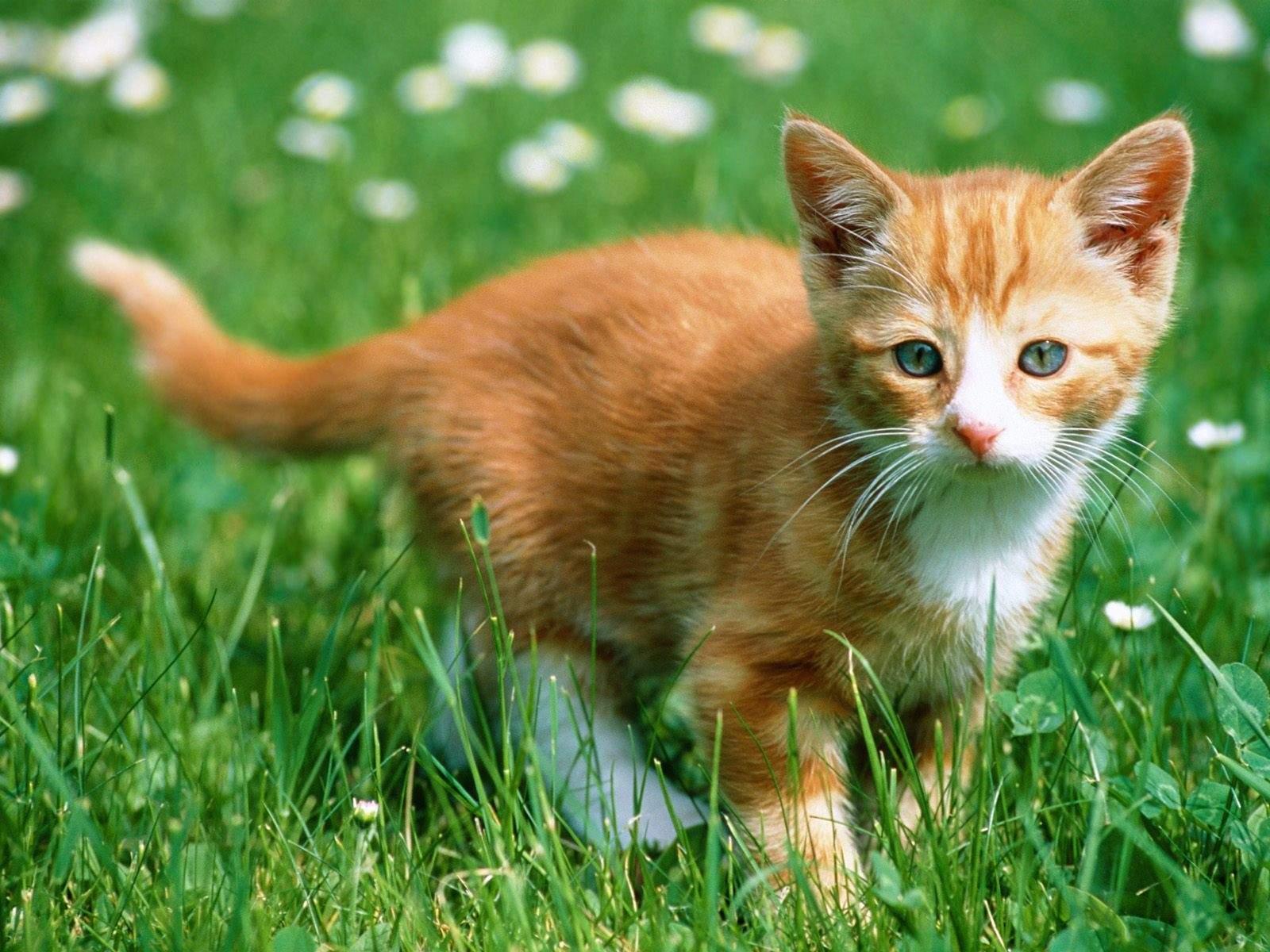 Iubitorii de şobolani pleşuvi îi acuză de superficialitate pe iubitorii de pisici