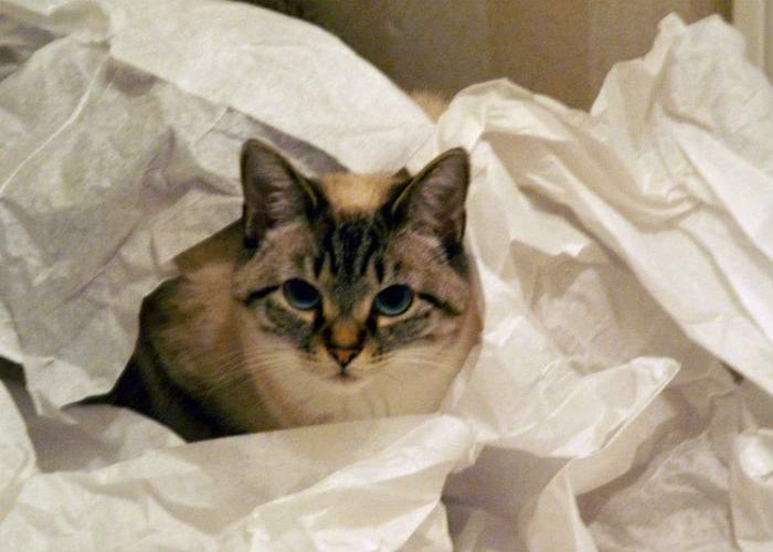 Dezastru la Zewa. O pisică intrată în depozit a desfăcut 174.000 de role!