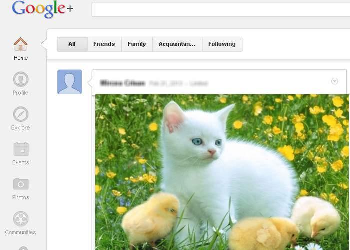 Inuman! O poză cu o pisică a fost abandonată pe o reţea socială pustie, Google Plus