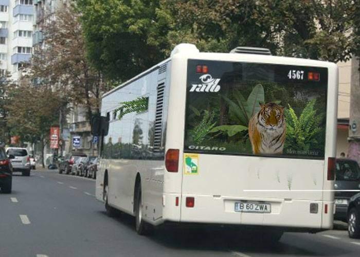 Efectul de seră! În autobuzele RATB au început să crească plante exotice populate de animale