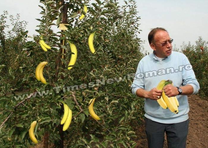 Guvernul lansează un program prin care încurajează pomii fructiferi să producă fructe exotice