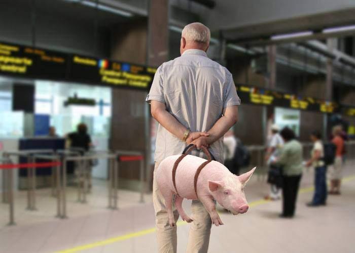 Românii abuzează de noua politică WizzAir. Un pasager a pus mânere la porc şi l-a luat ca bagaj de mână