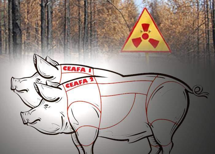 """Românii regretă accidentul nuclear de la Cernobîl: """"În anul ăla am avut un porc cu două cefe!"""""""