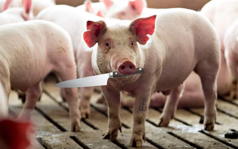 Comisia pentru Egalitate de Şanse a decis: anul ăsta trebuie să-i dăm şi porcului un cuţit