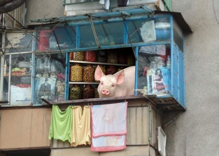 """Adio, premiu pentru """"Cel mai frumos balcon""""! Unui bucureştean i-a mâncat porcul din balcon toate murăturile"""