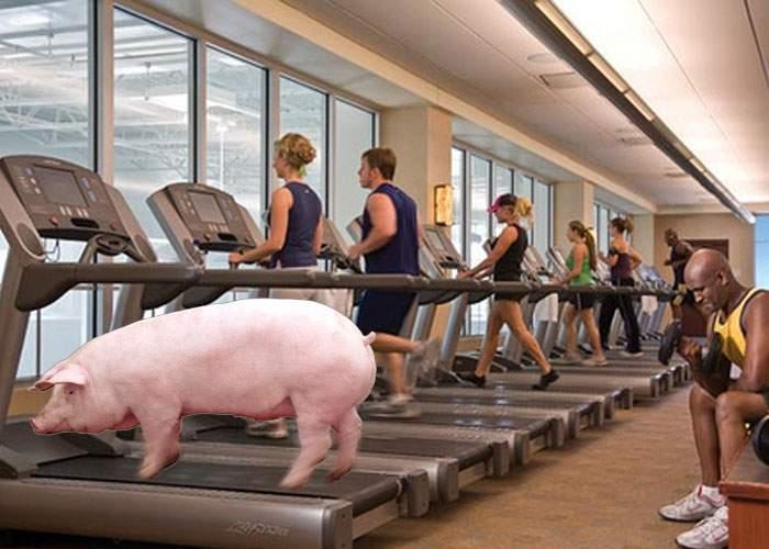 Un român şi-a hrănit porcul un an doar cu soia şi acum porcul are blog de lifestyle