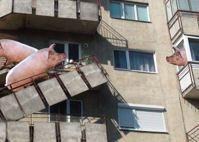 Crăciunul e aproape. În Berceni au căzut sute de balcoane, de la greutatea porcilor crescuți în ele