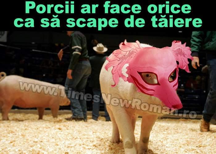 Şase trucuri pentru porcii care nu vor să fie sacrificaţi de Crăciun