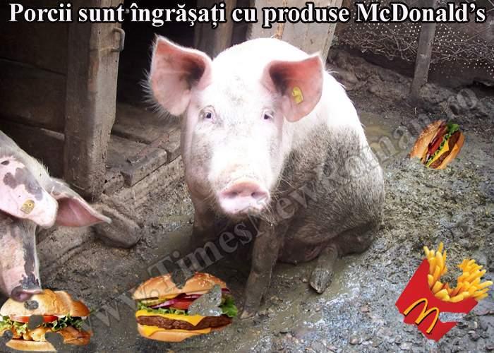 Mulţi români îşi îngraşă porcii cu produse de la McDonald's