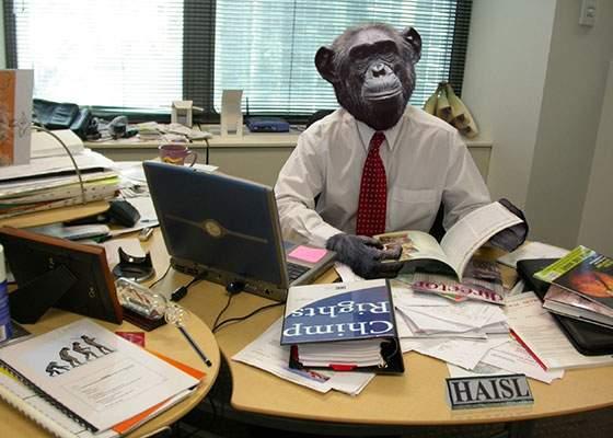 Facultatea de Jurnalism a angajat o maimuță care să le predea studenților care se vor Mircea Badea