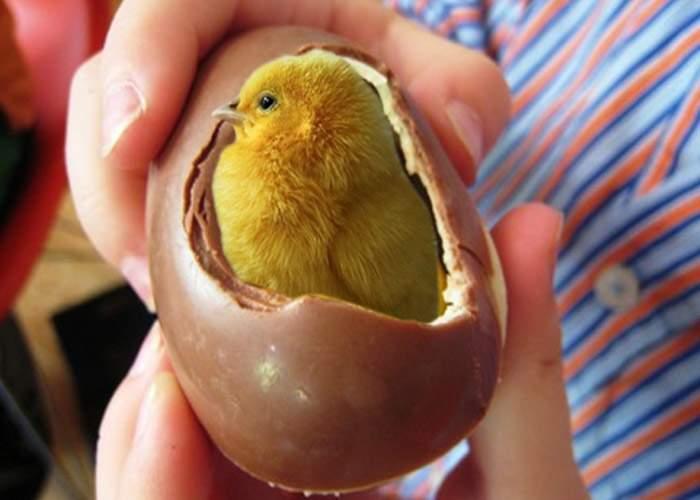 Ion Cristoiu a găsit un pui de găină viu într-un ou Kinder
