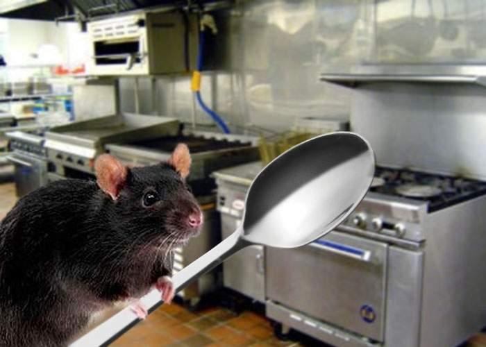 Ratatouille de România! Într-un restaurant din Mamaia gătesc şobolanii