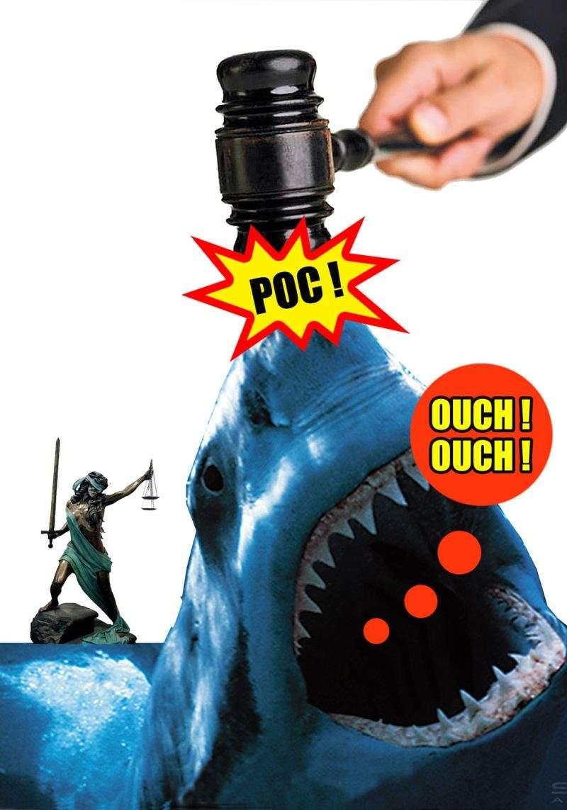 Judecătorii au ieşit la pescuit, să prindă marii rechini