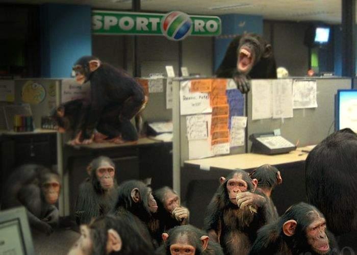 Sport.ro, medaliat de un ONG pentru eforturile de ocrotire şi promovare a cimpanzeilor