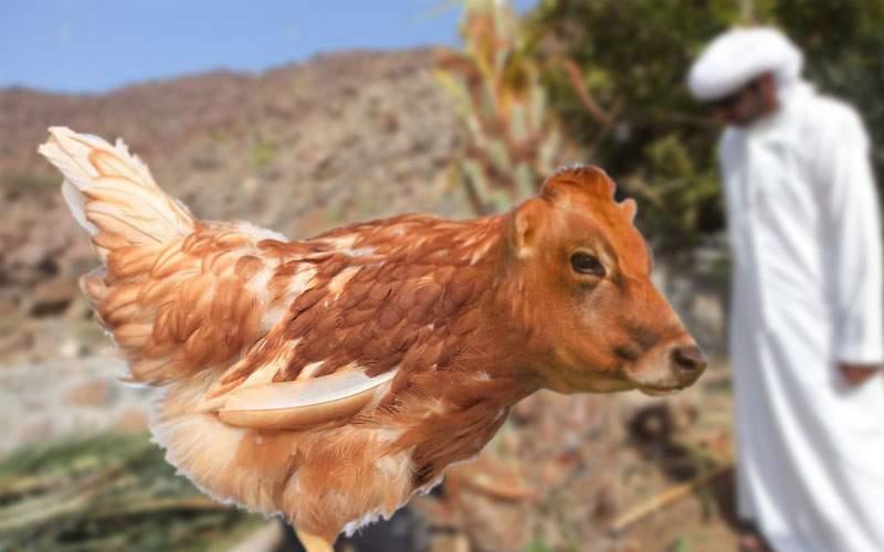 A fost descoperit animalul jumătate vită, jumătate pui din care se face şaorma amestecată
