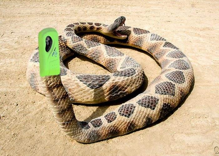 Japonia: Şarpele cu clopoţei va fi înlocuit de şarpele cu sonerie