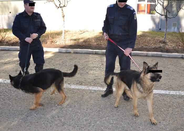 Un câine poliţist este acuzat că a hărţuit sexual câteva subalterne la Centrul Chinologic Sibiu