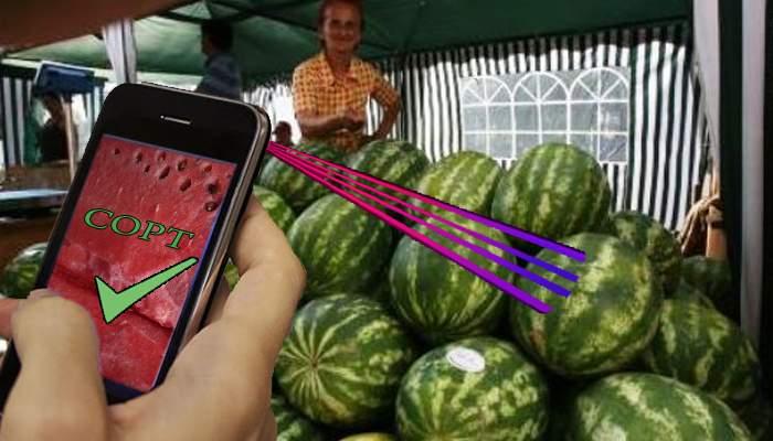 Adio dop! A apărut aplicaţia care scanează pepenele şi îţi spune dacă e dulce sau nu