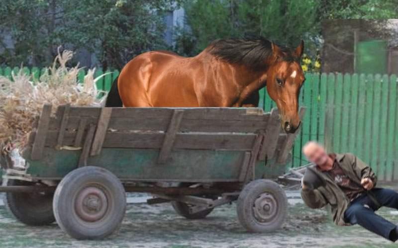Ca să scape de dosar, un căruţaş beat care a făcut accident a schimbat locul cu calul