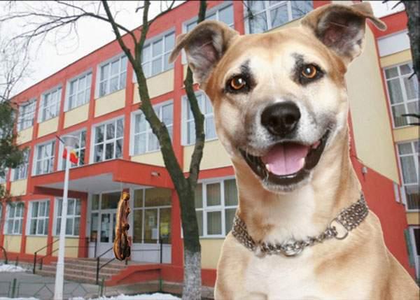 Persoane necunoscute au uns cu slănină o şcoală din Sectorul 5 şi pompierii se luptă să îndepărteze câinii