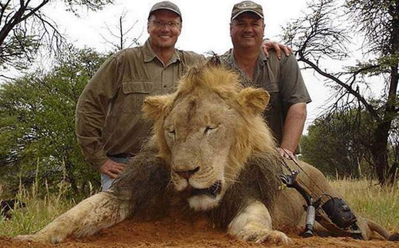 """Americani proşti! Dentistul care a ucis leul se scuză: """"Credeam că e elefant, îl vânam pentru colţi"""""""