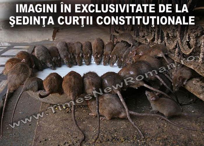 sedinta_ordinara_a_curtii_constitutionale