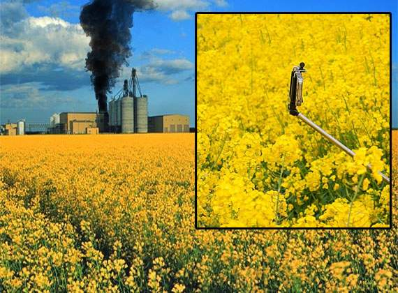 Defecţiune majoră la fabrica de ulei de rapiţă, din cauza unui selfie stick uitat în lan